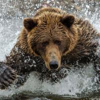 Alaska blabbers