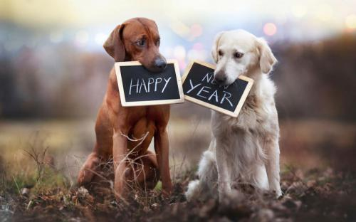 happy-new-year-cute-dogs-1680x1050-wide-wallpapers.net
